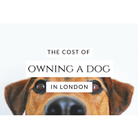 The cost of owning a dog in London